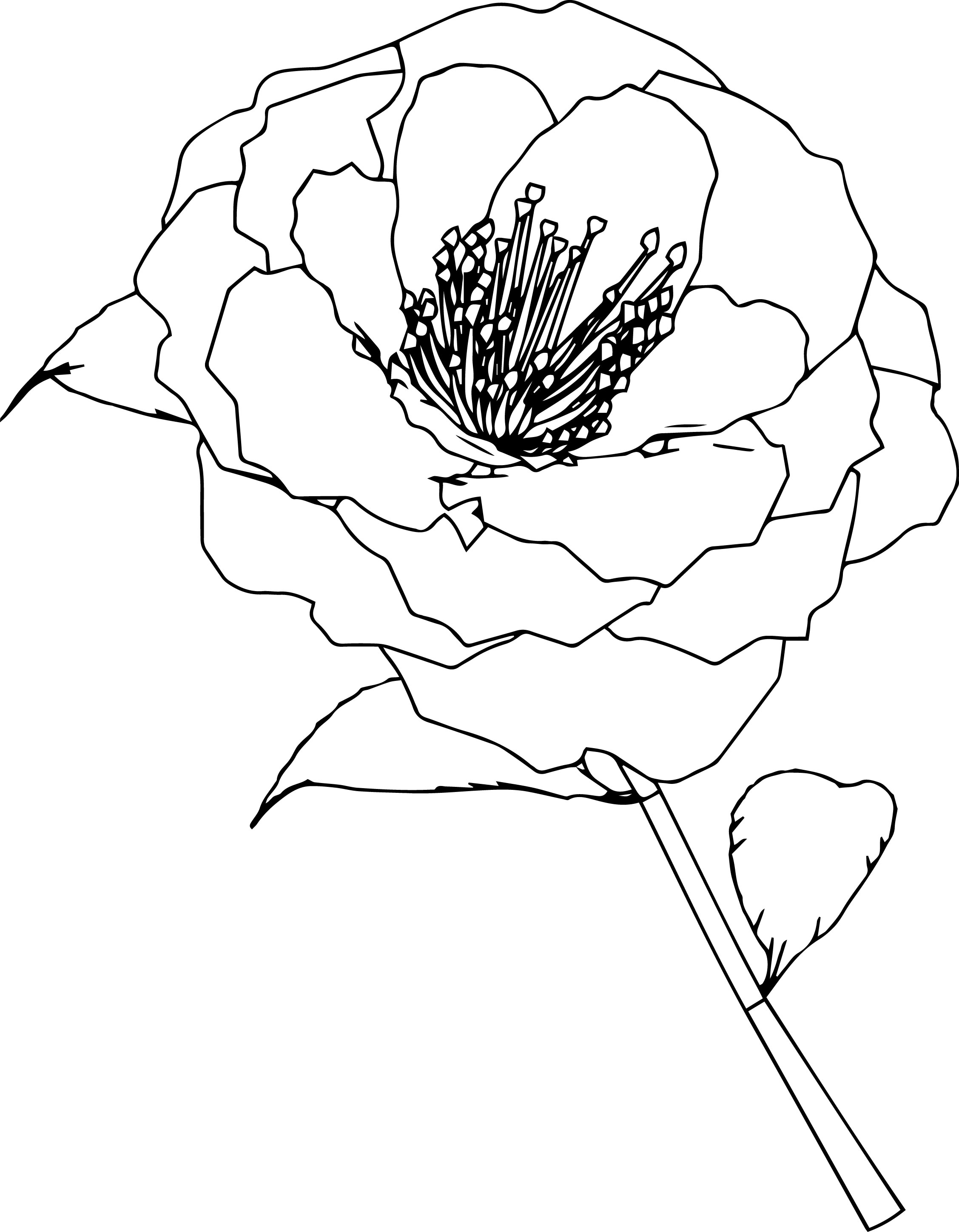 flower coloring page wecoloringpage