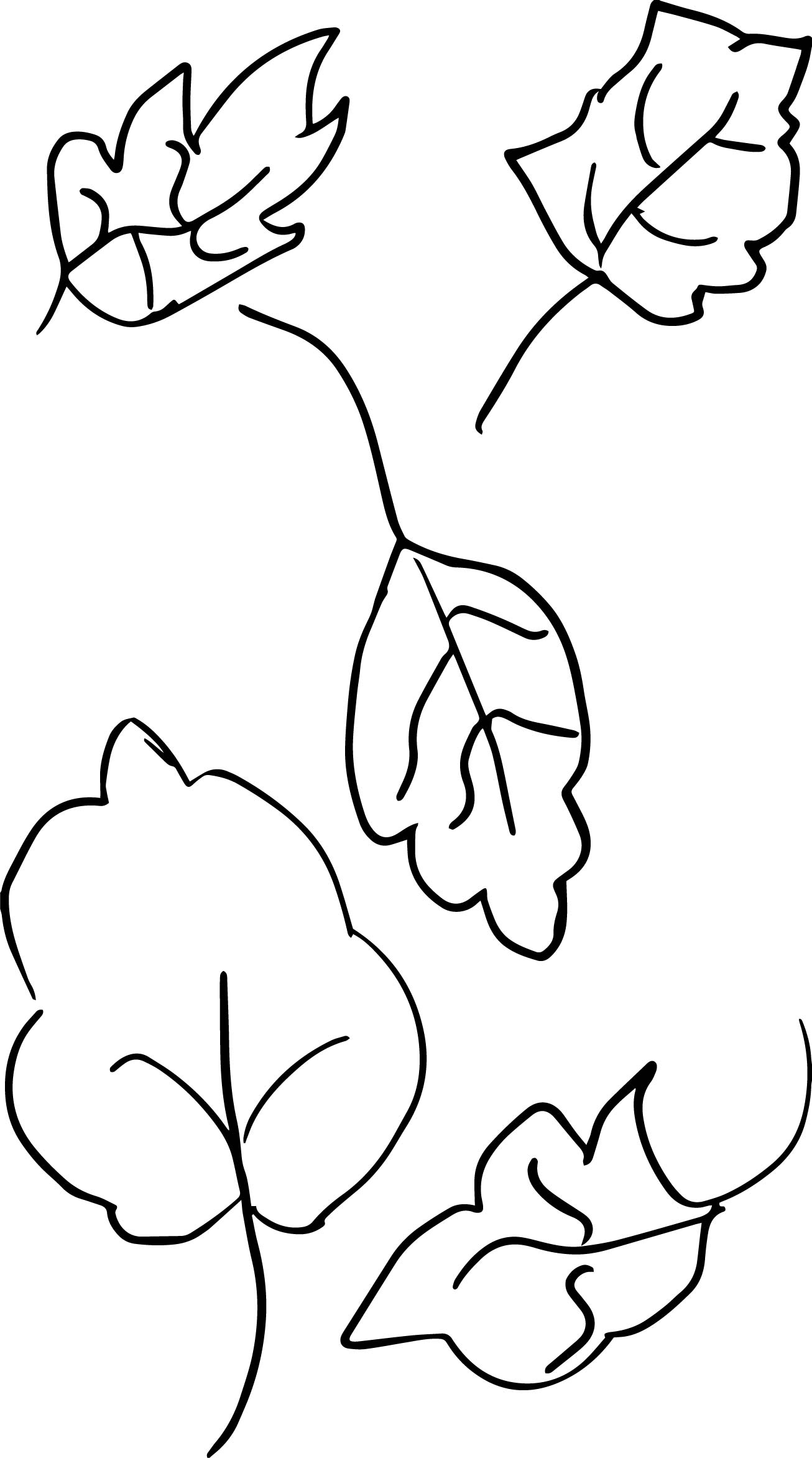Own Drawing Sketch Leaf Coloring Page By Brus Wonderus