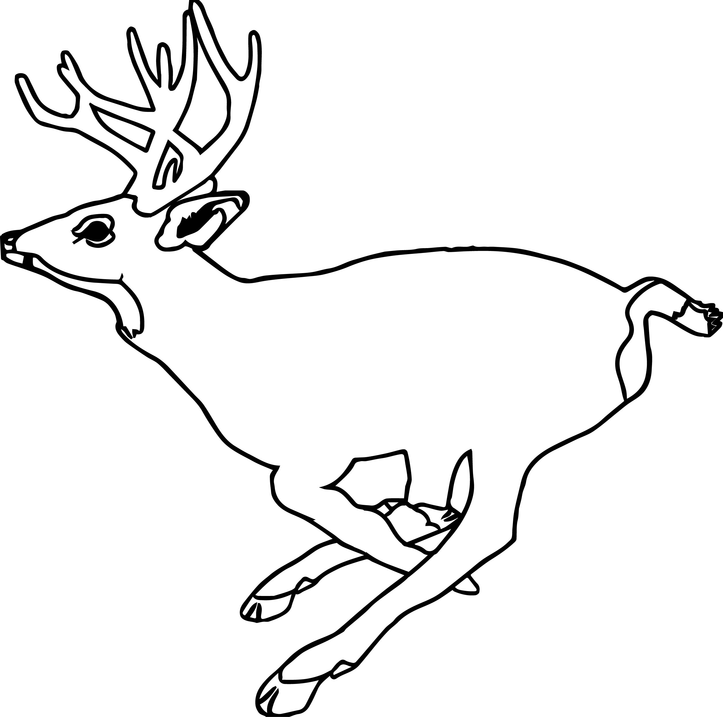 Realistic Zoo Galloping Deer Runned Coloring Page