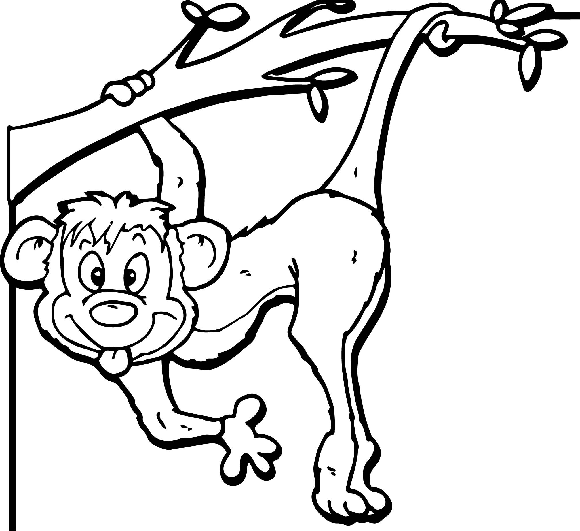affe bild zoo coloring page wecoloringpage