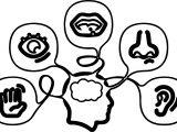 5 Senses Coloring Page
