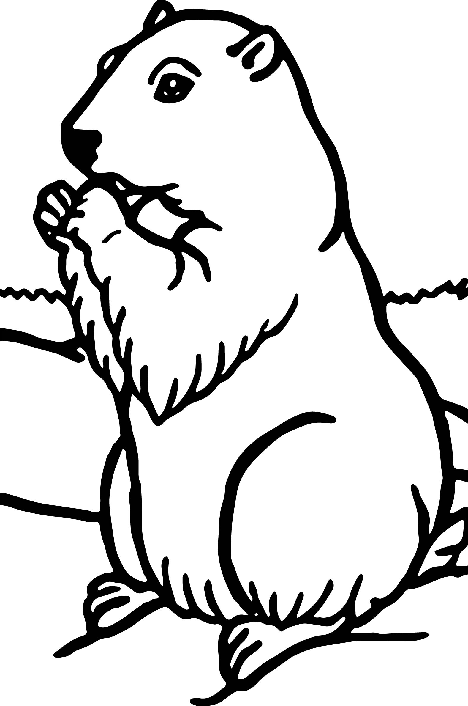 realistic groundhog coloring page wecoloringpage