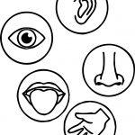 Senses Coloring Page