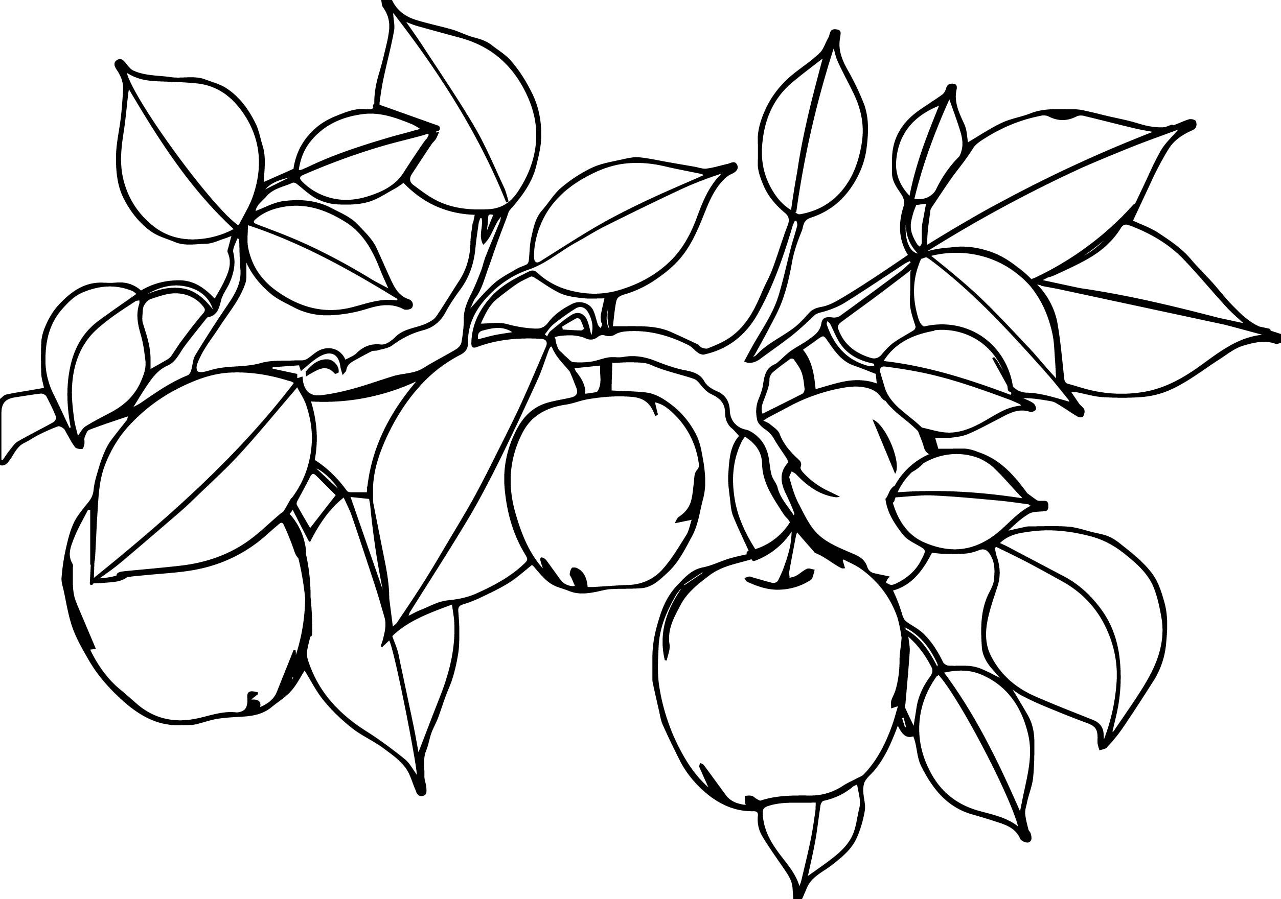 Apple Tree Leaf Coloring Page Wecoloringpage