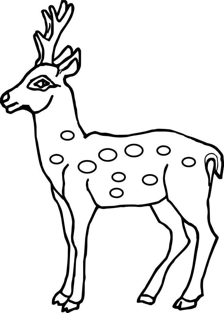 baby spotted deer coloring page