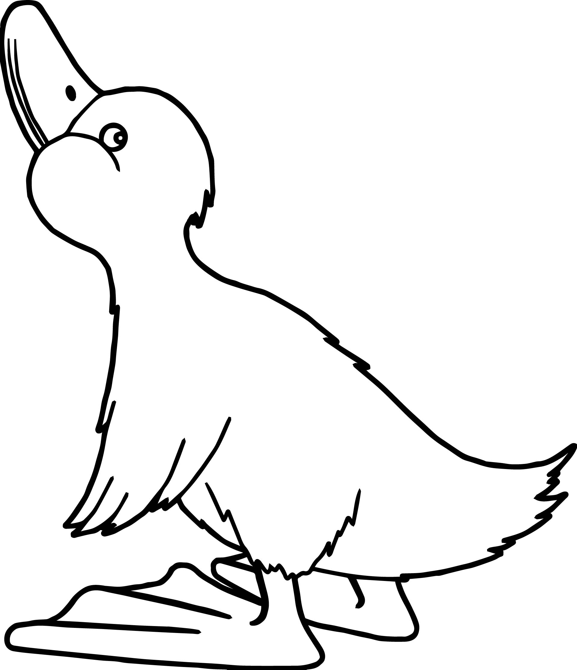 Duck Bird Coloring Page