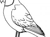 Parrot Bird Coloring Page