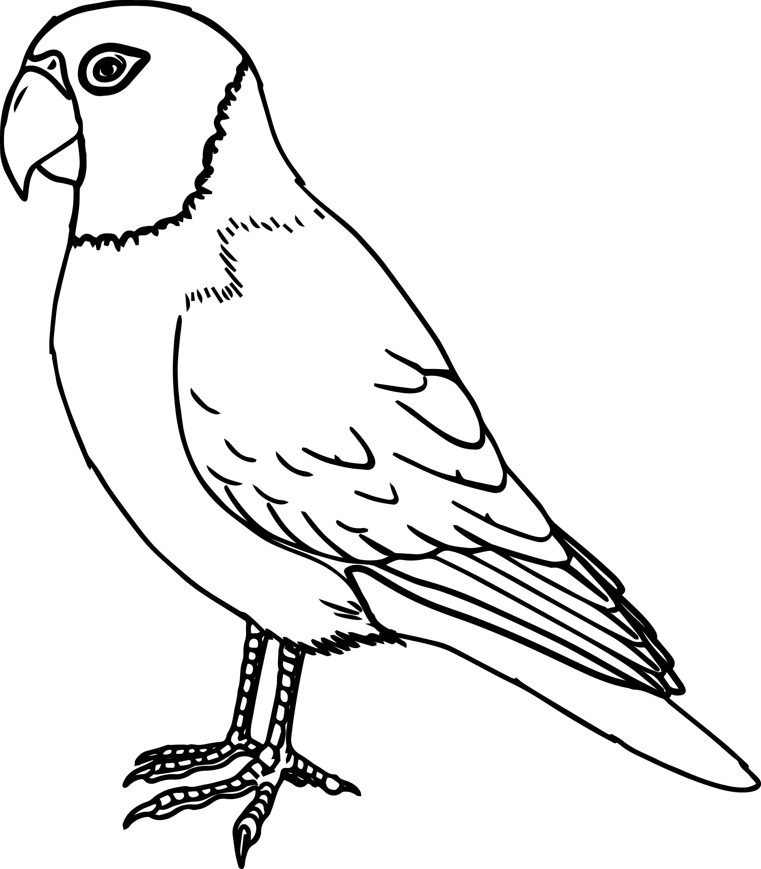 Parrot bird coloring page for Coloring pages parrot
