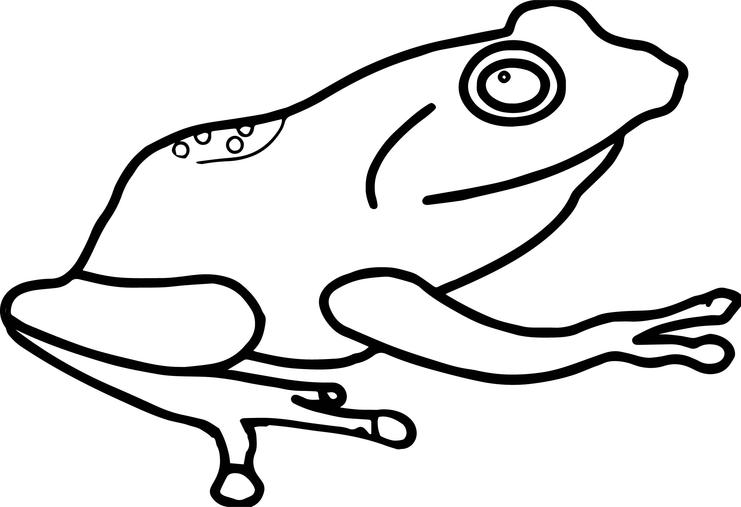 Amphibian Frog Coloring Page
