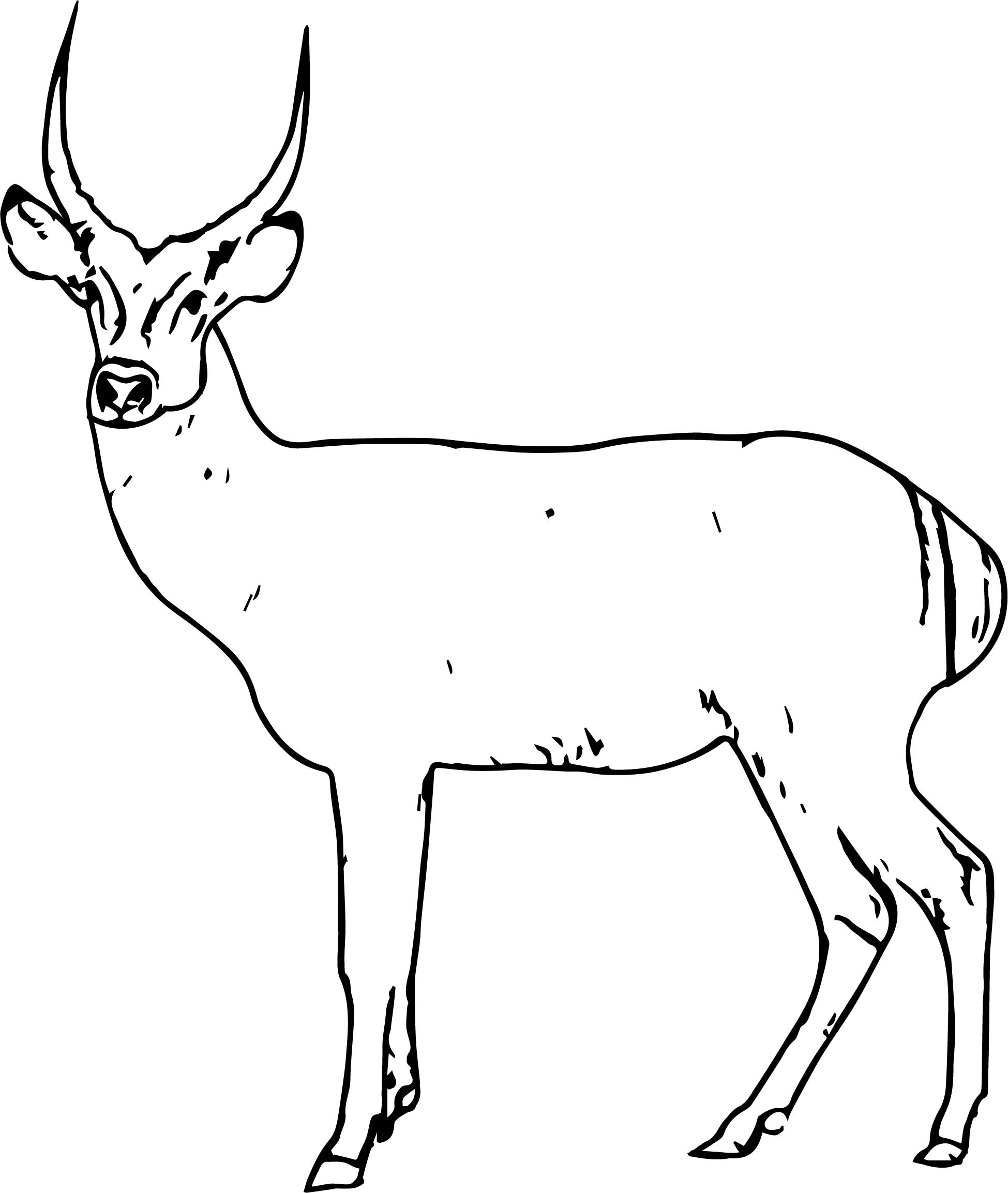 Antelope Spotted Deer Coloring Page