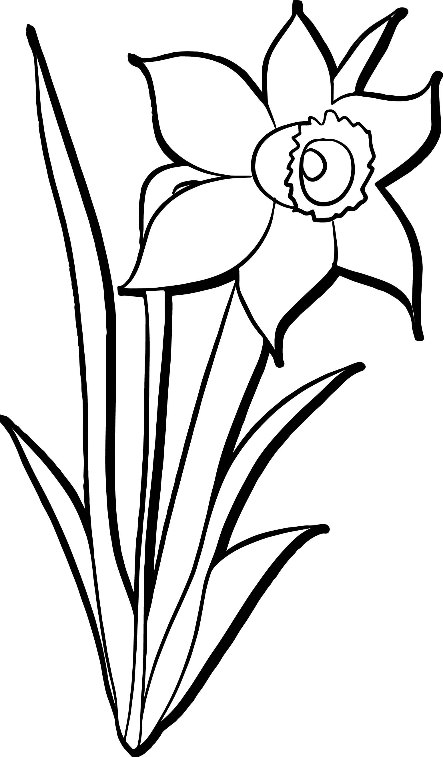 Rainforest flower coloring pages - Printable May Flowers Coloring Pages