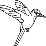 Rainforest Hummingbird Coloring Page