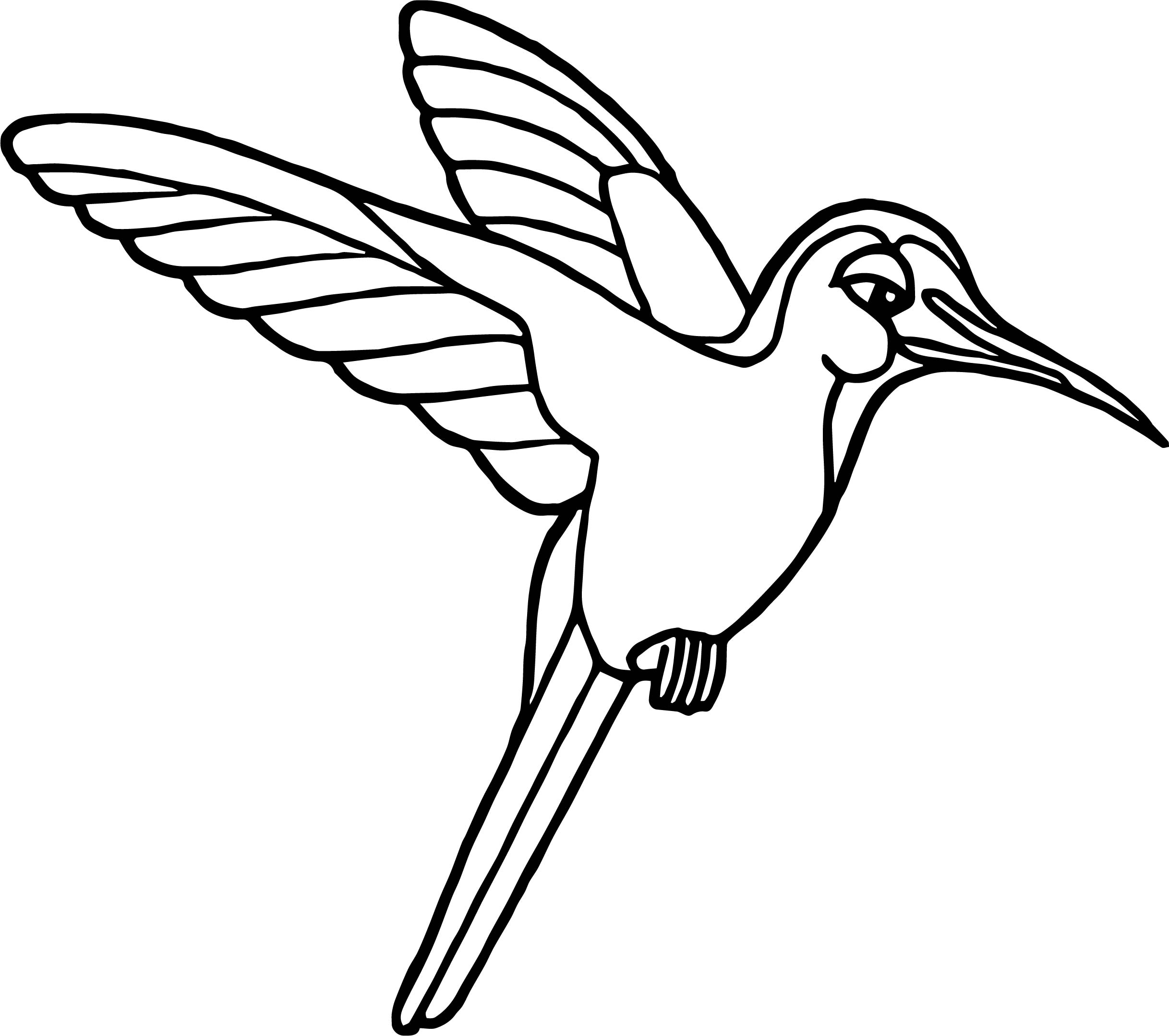 rainforest hummingbird coloring page wecoloringpage