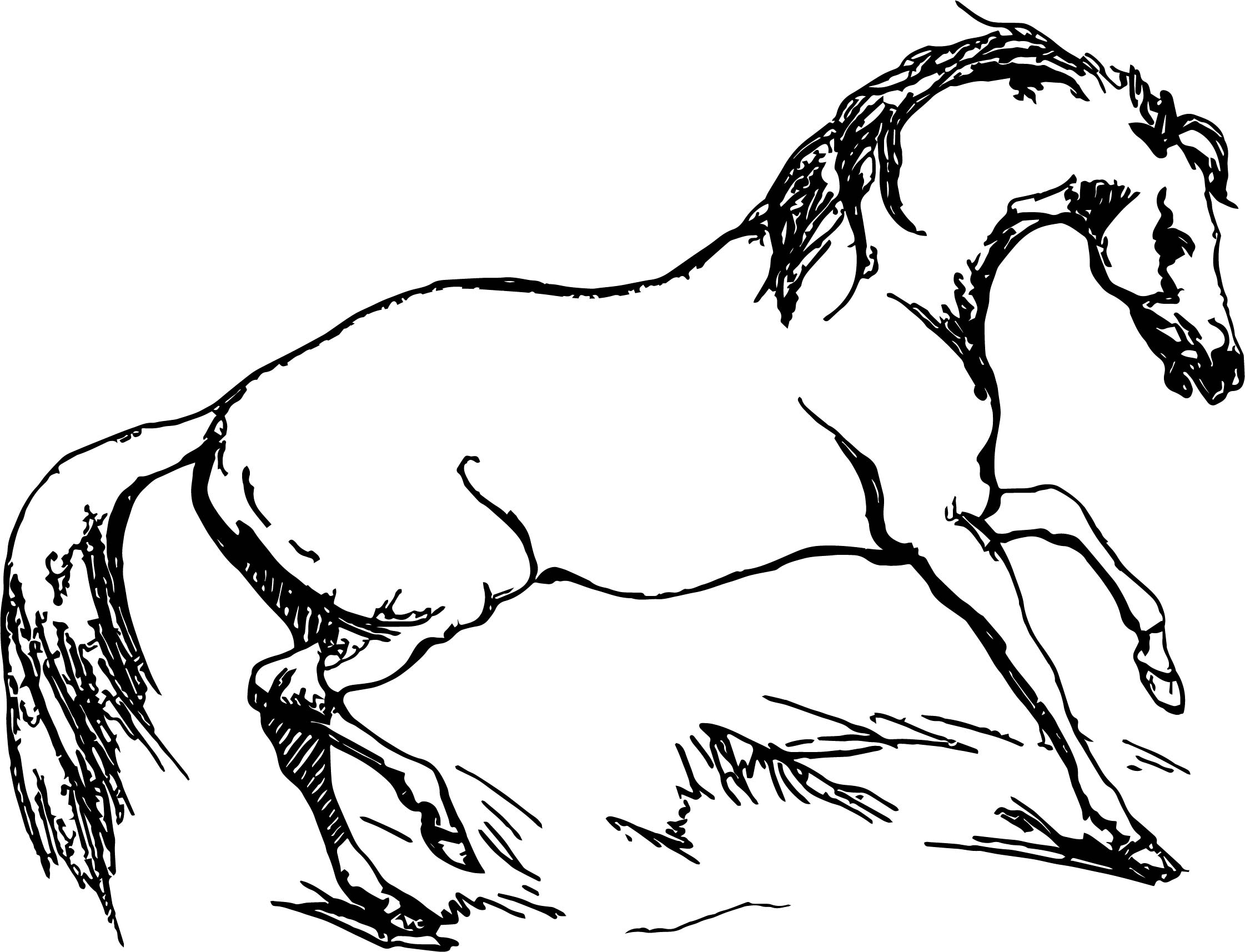 Arabian Horse Fiesty Coloring Page | Wecoloringpage