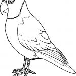 Big Parrot Coloring Page