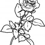 Classic Rose Ink Sketch Drawing Pencil Coloring Page