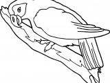 Parrot On Tree Coloring Page