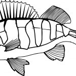 Perch Fish Underwater Submarine Coloring Page