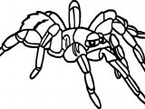 Rainforest Tarantula Coloring Page