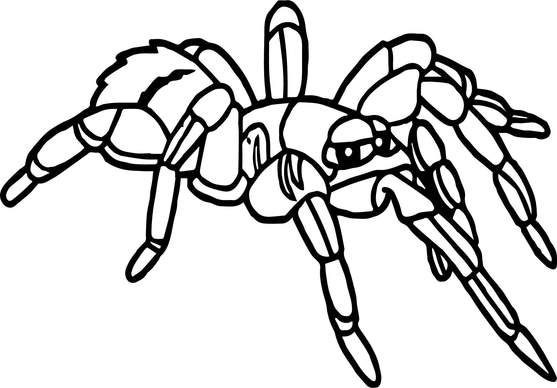Rainforest Tarantula Coloring Page