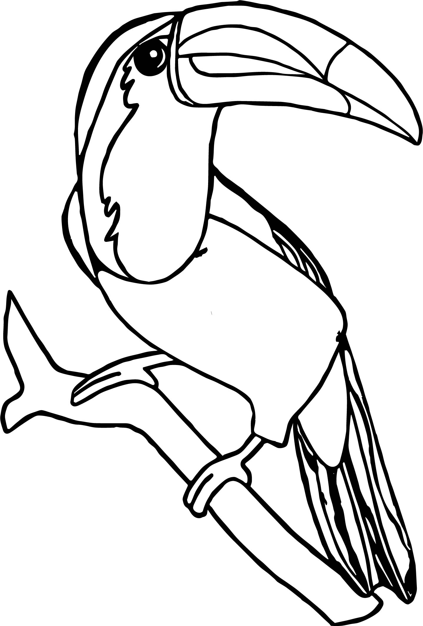 Rainforest Toucan Bird Coloring Page Wecoloringpage