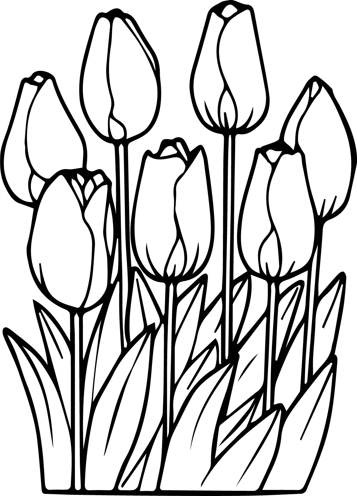 tulip coloring pages - seven tulips coloring page