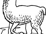 Walk Alpaca Coloring Page