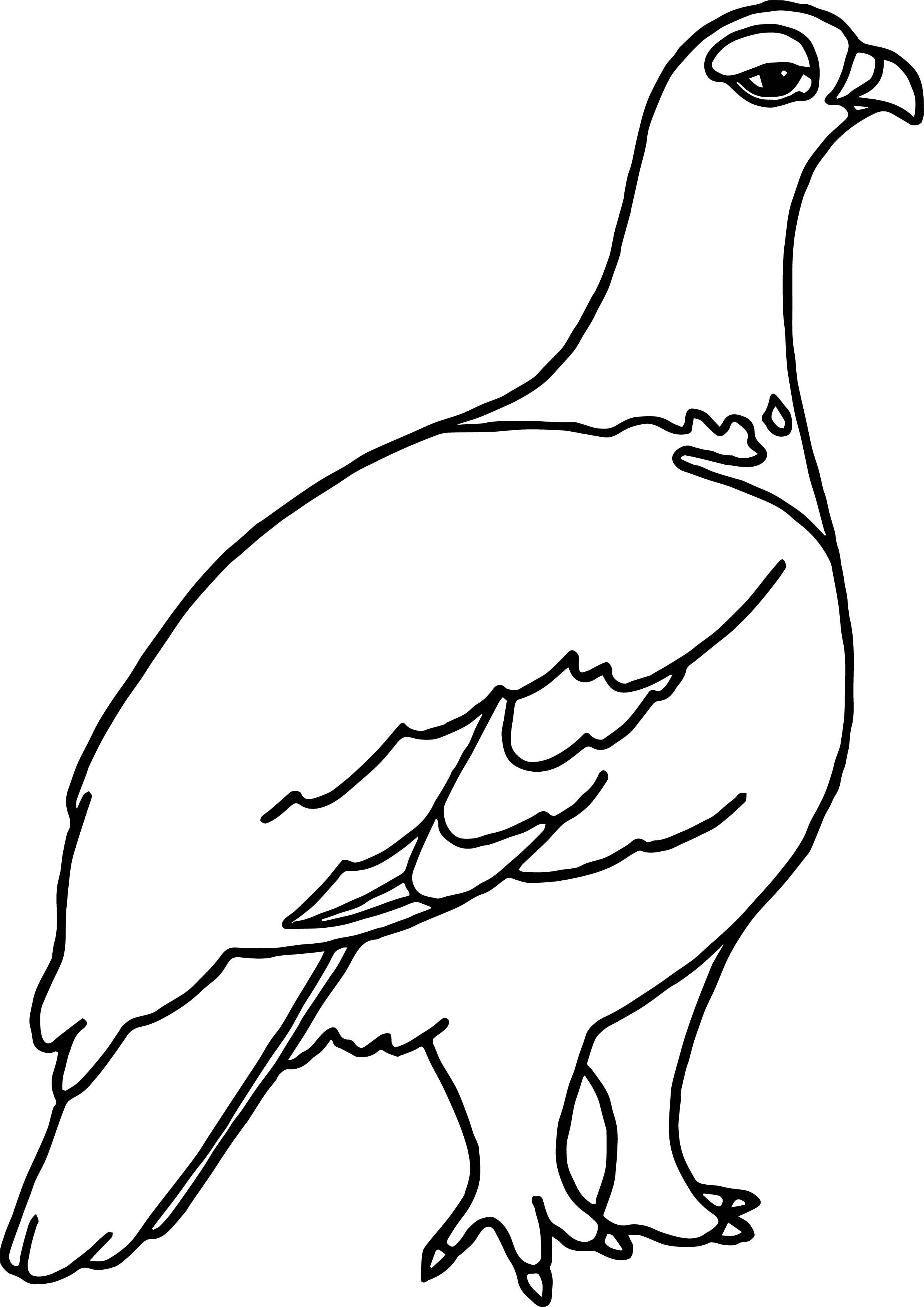 Alaskan Alaska Willow Ptarmigan Coloring Page