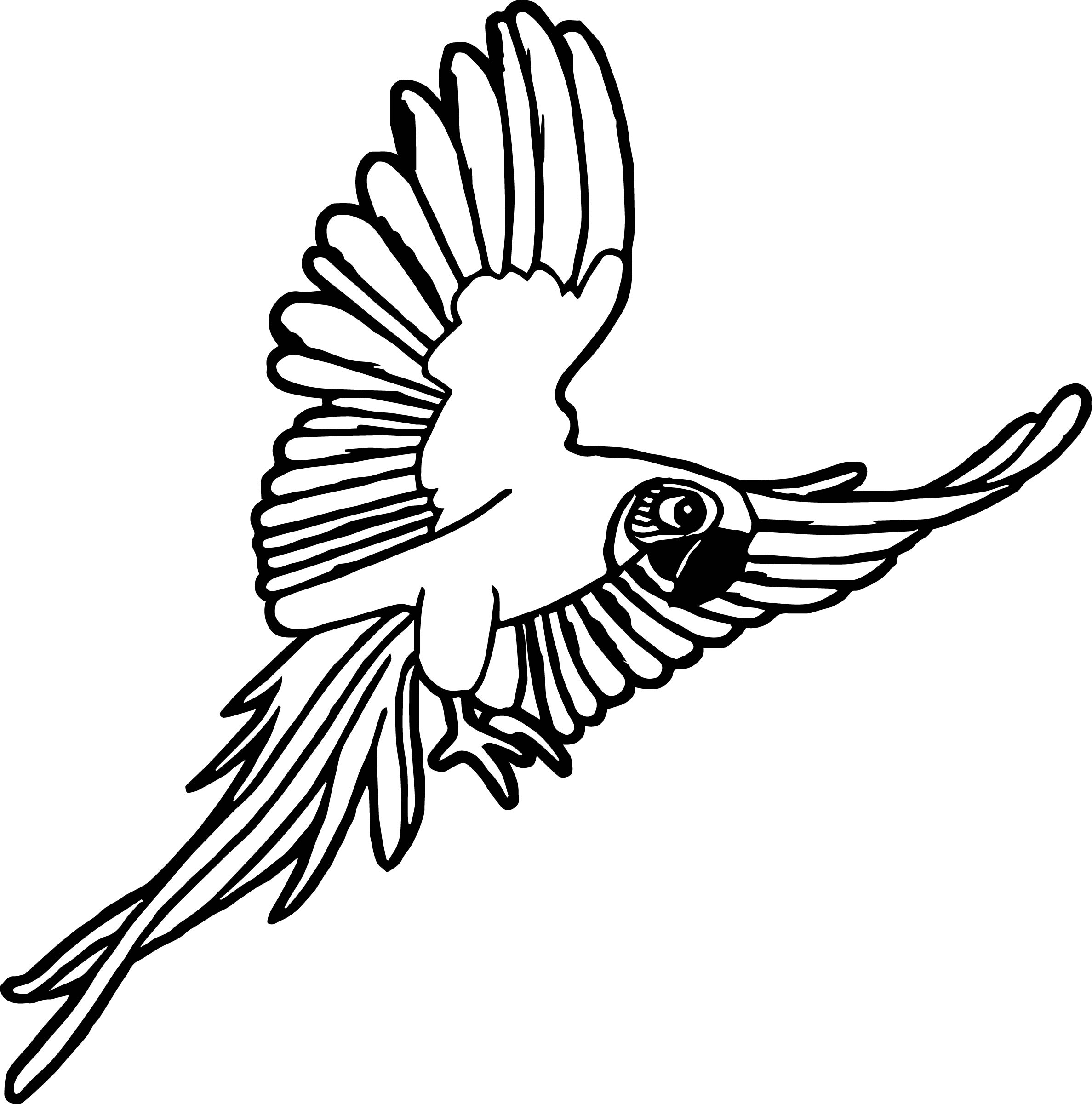 Rainforest Macaw Coloring Page