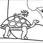 Tortoise Turtle Slow Down Coloring Page