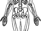 Whole Skeleton Picture Sketch Drawing Coloring Page