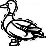 Black Duck Coloring Page