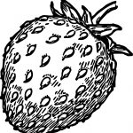 Free Strawberry Drawing Coloring Page