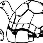 Mother And Baby Tortoise Turtle Coloring Page