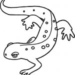 New Hampshire Amphibian Amphibian Coloring Page