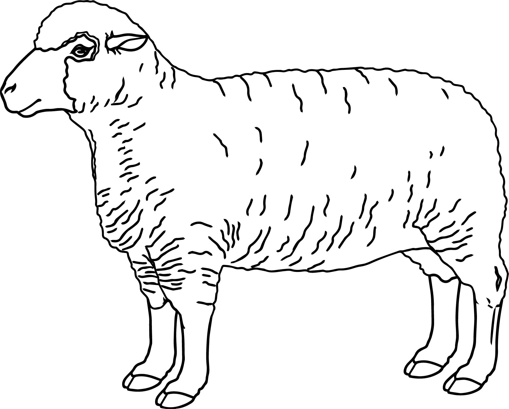 Realistic Sheep Coloring Page