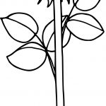Simple Rose Printable Picture Coloring Page