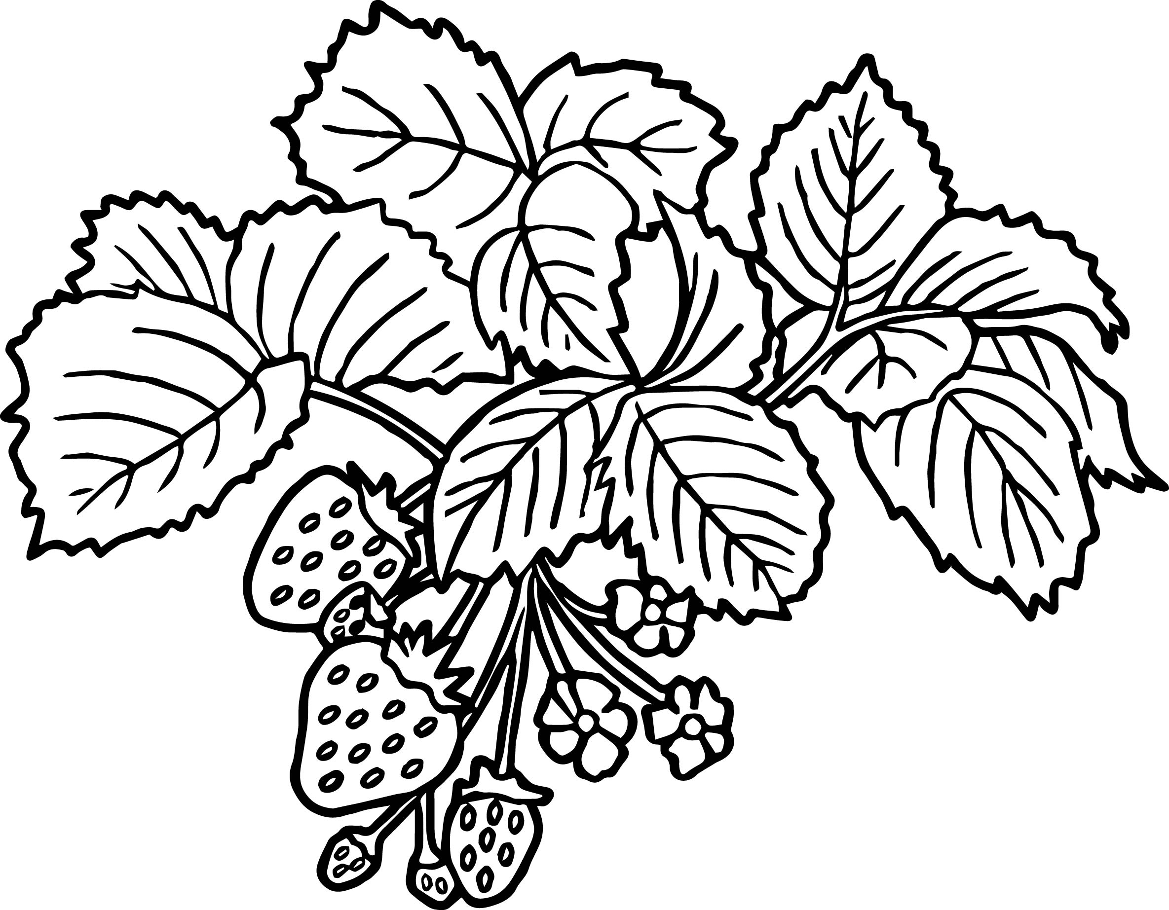 strawberry plant coloring pages