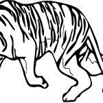Tiger Walking Coloring Page