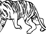 Tiger Walking Coloring Page