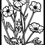 Tom Coloured Poppy Stained Glass Flowers Coloring Page