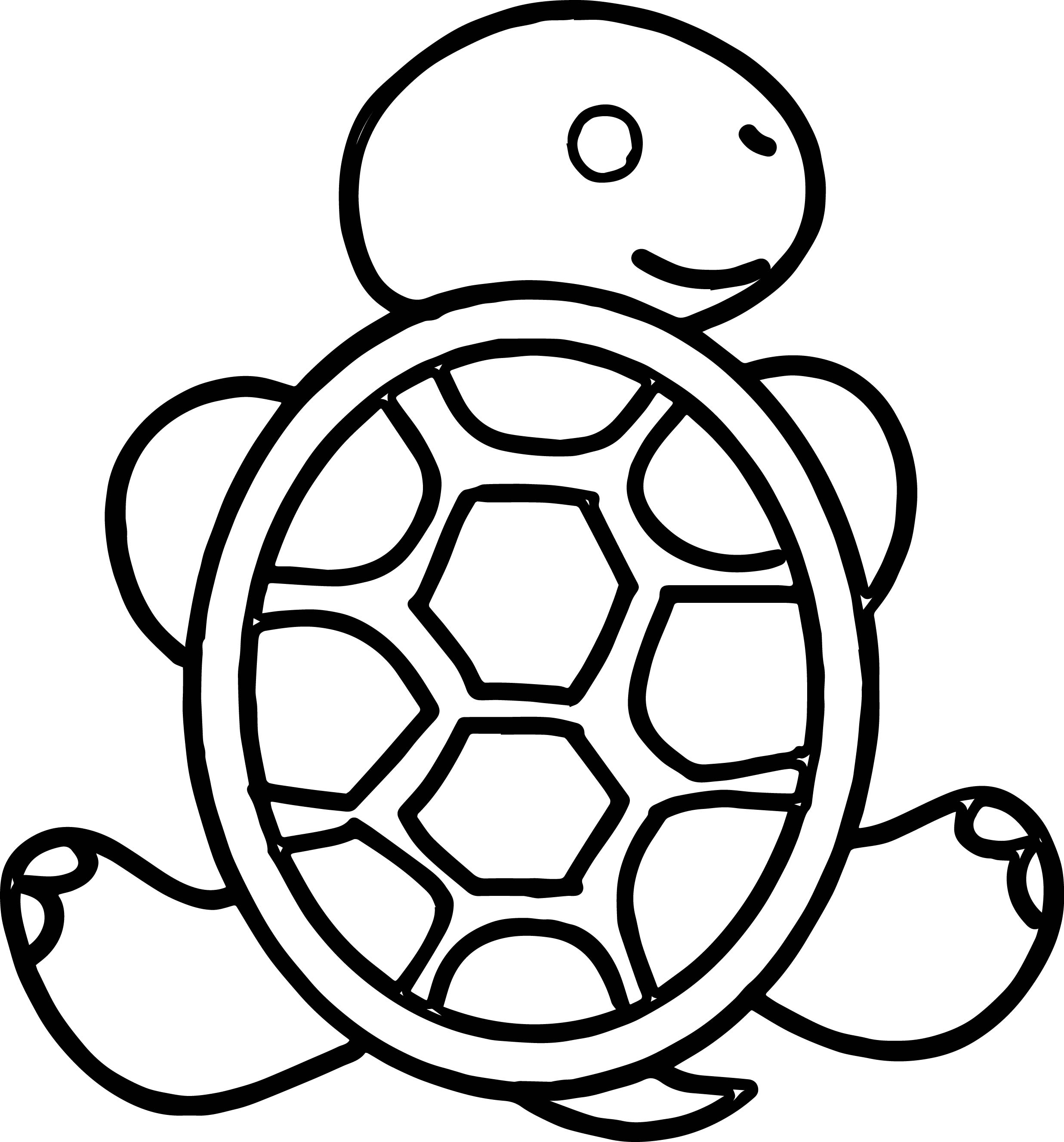 Tortoise Turtle Back Coloring Page