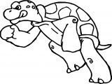Tortoise Turtle Fight Coloring Page