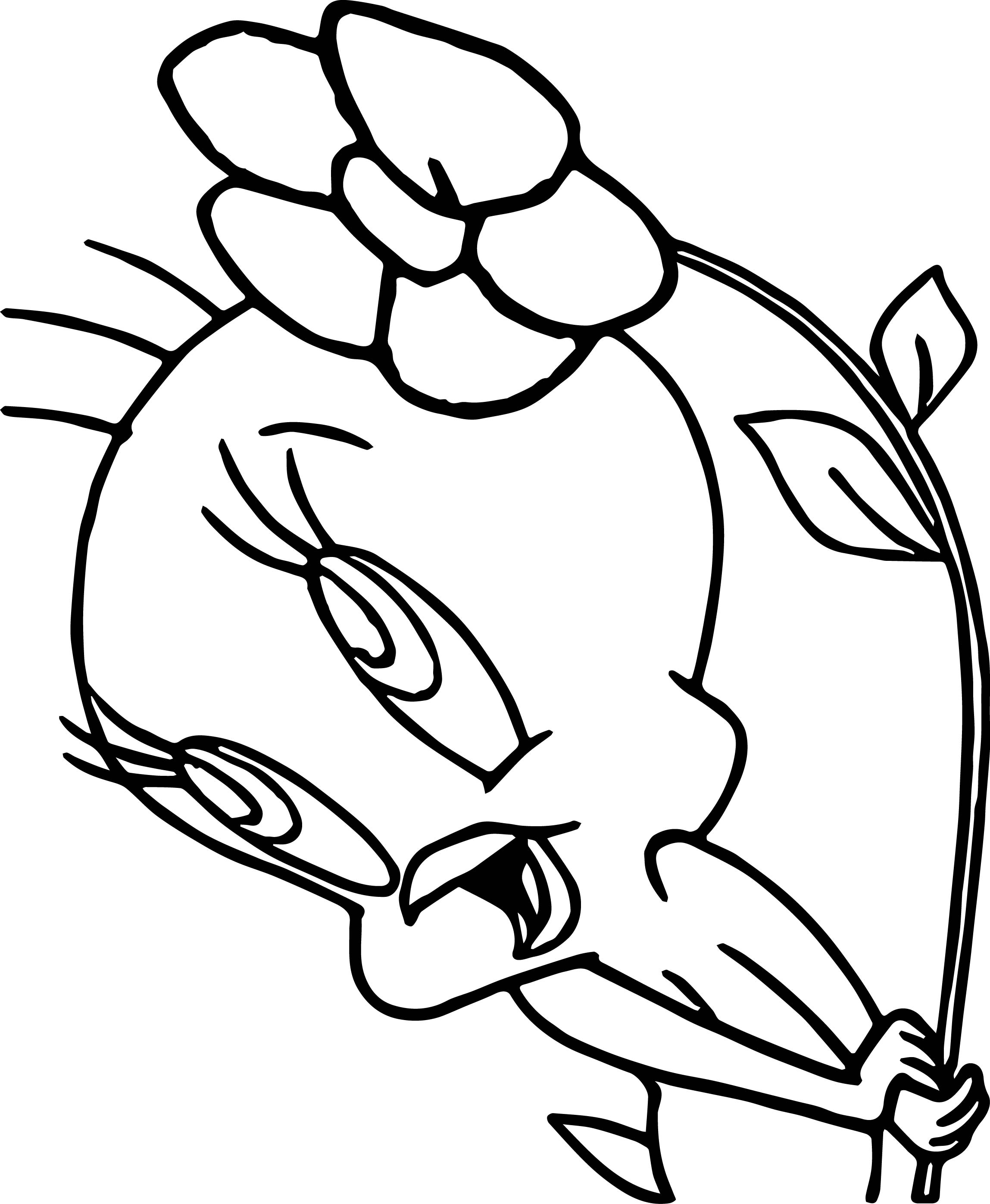 Tweety Flower Wind Coloring Page