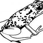 Rainforest Amphibian Coloring Page