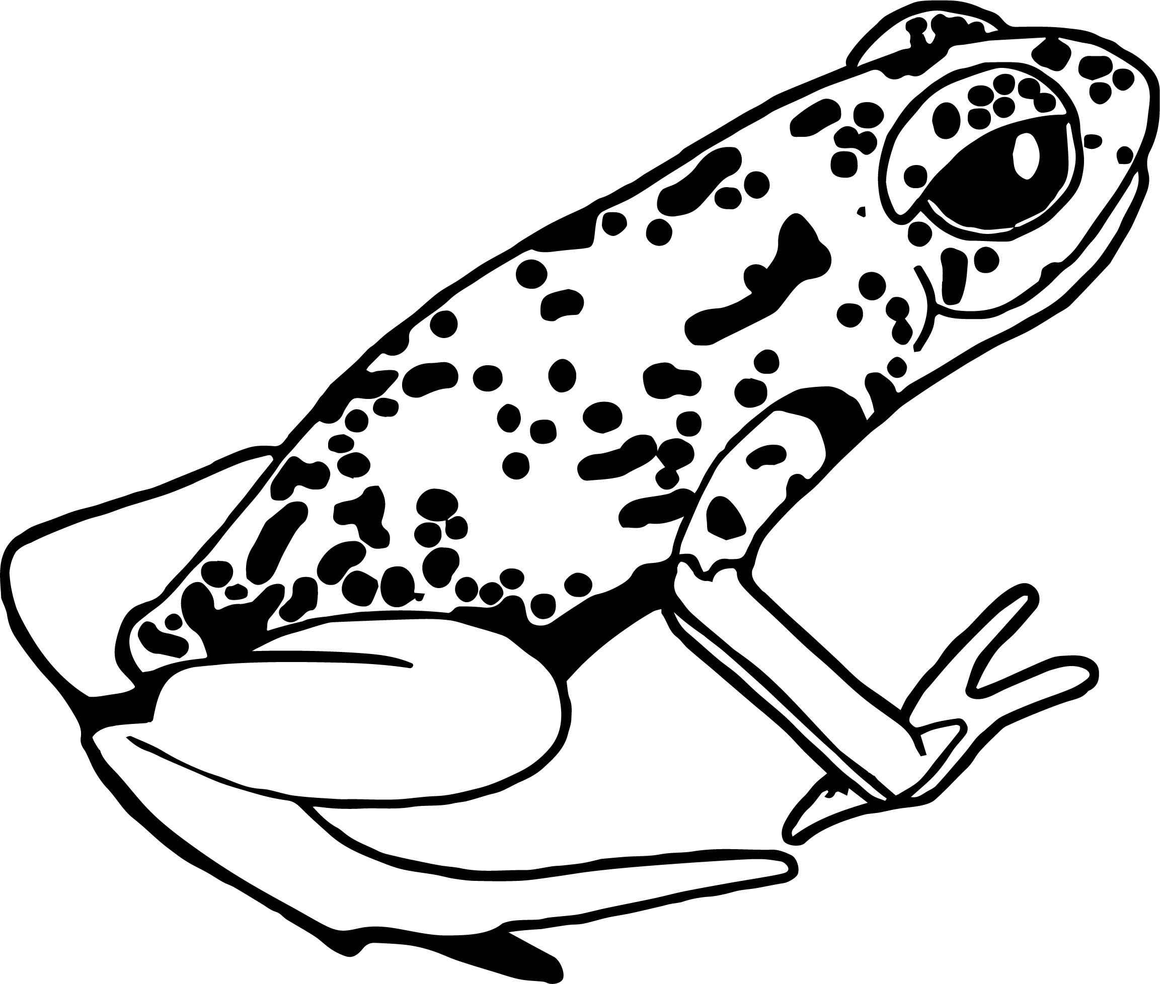 rainforest amphibian coloring page wecoloringpage