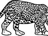 Rainforest Jaguar Coloring Page