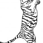 Tiger On Two Foot Coloring Page