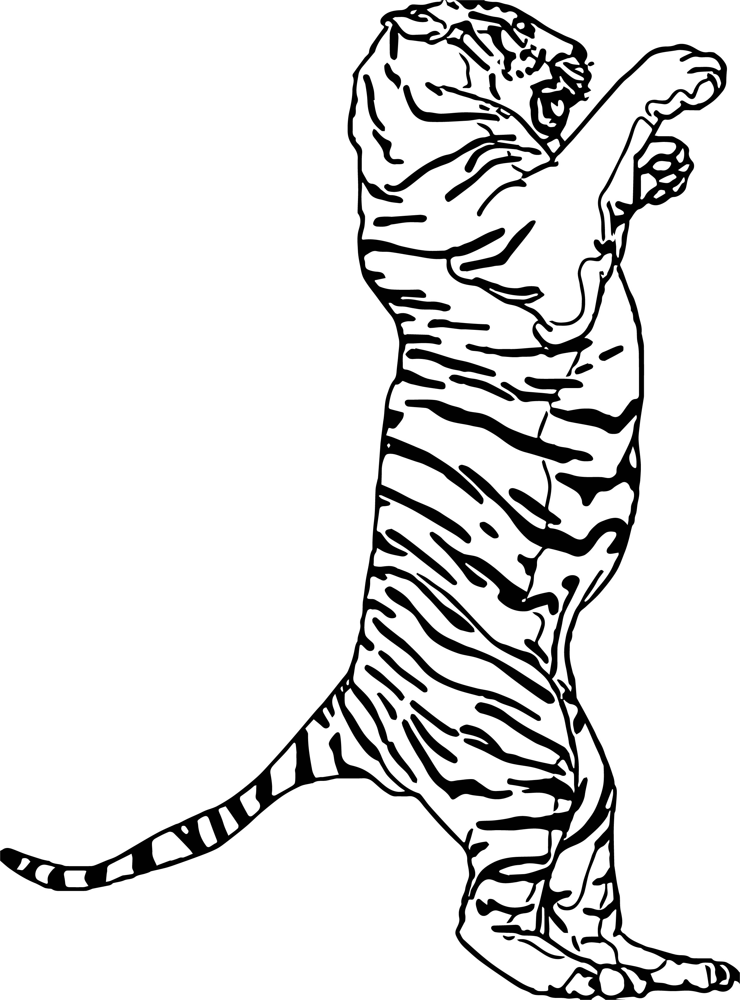 Tiger On Two Foot Coloring Page Wecoloringpage