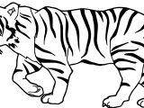Tiger Walk Coloring Page